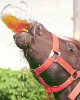 beer_drinking_horse(1)